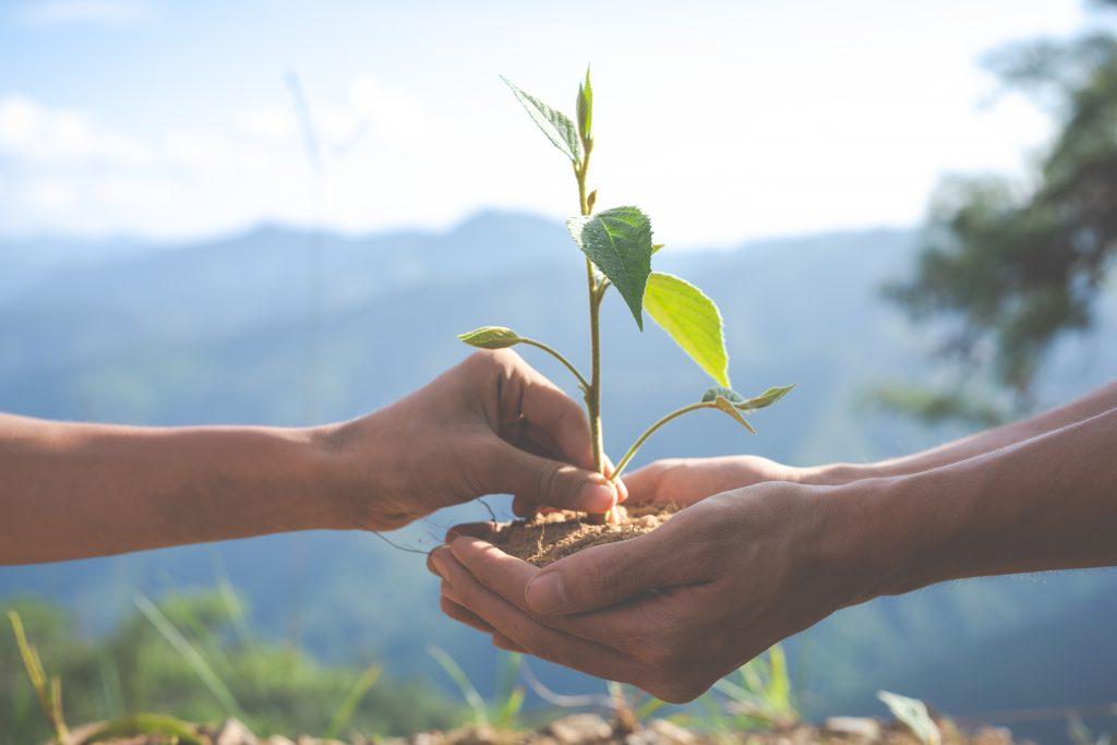 environmental conservation in the garden for children